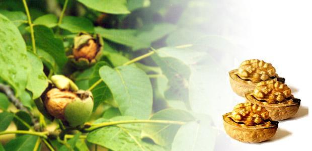 Estos frutos secos son muy ricos en grasas de gran calidad, excelentes aliadas de la función cardiaca, ayudando de forma efectiva a reducir nuestro colesterol, es decir, son cardiosaludables.